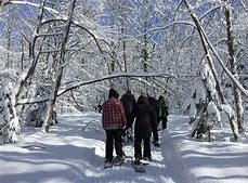 Group of people snow shoeing through a pathy in a snowy wooded area